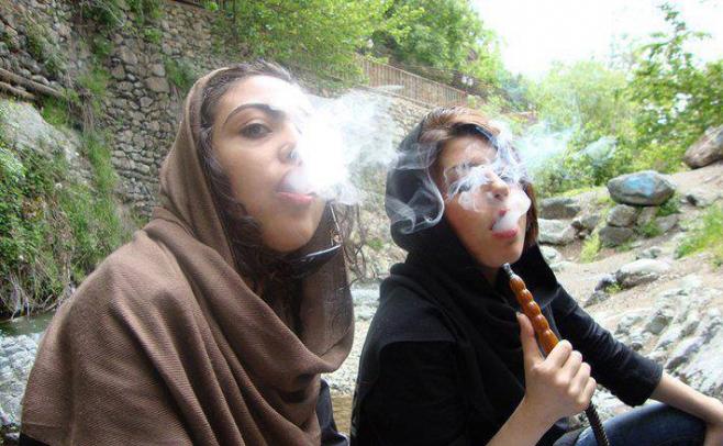 توتون های آلوده به سوسک در قلیان ایرانی ها