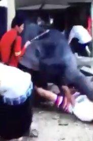 سرگردانی ۲ گردشگر ایرانی در تایلند بعد از حمله فیل!